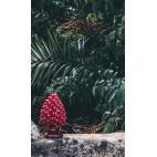 Pigne H20 PIGNA • Rosso Etna • H20